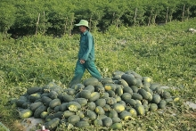 supporting farmers sell watermelons is only a temporary solution