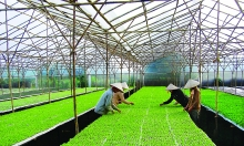 hanoi urges investment in citys farming to meet food demand