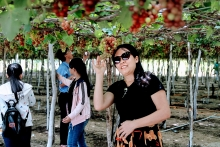 ninh thuan toasts its grapes and wine