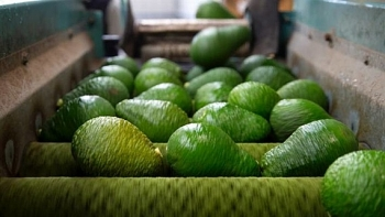 vietnam strives to bring avocados to us market