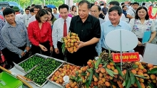 thanh ha lychee festival 2019 opens in hai duong