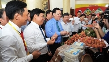 forum promotes consumption of bac giang lychees