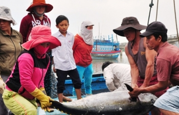 fisheries industry eager to restore production and exports