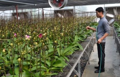 hanoi plans for flowers ornamental plants to grow into spearhead sector