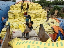 vietnams fertilizer imports surge in five months