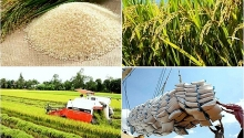 vietnams rice export price hits three year high