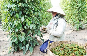 southern region strengthens farm product consumption