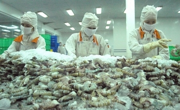 australia agrees to re import processed shrimps from vietnam