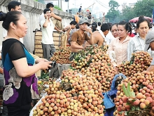bac giang litchis eye new markets