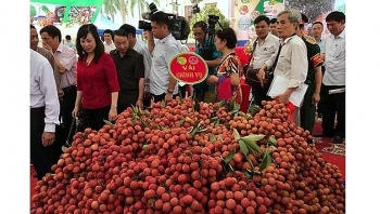 thanh ha litchi festival opens in hai duong