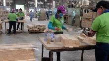 opportunities for vietnam to boost timber exports to australia