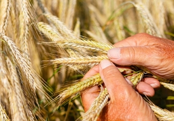 south korea japan halt imports of canadian wheat
