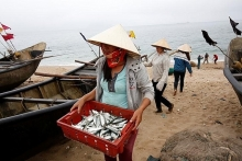 eu set to lift yellow card on vietnam fisheries next year