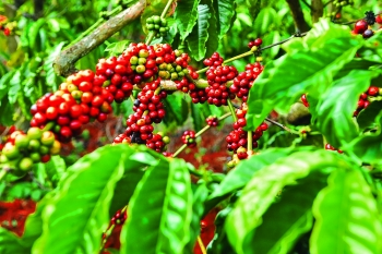 changes brewing in coffee farm code system