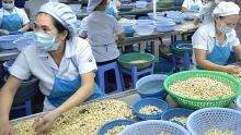 dutch group to invest us 250 million to develop binh phuoc cashew brand