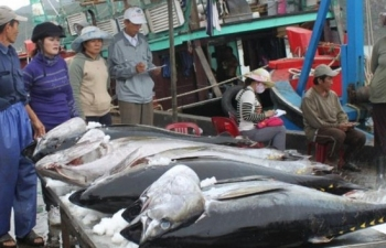 eu to remove tax on 11500 tonnes of vietnamese canned tuna