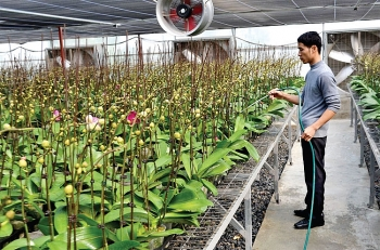 hanoi takes lead in new rural areas