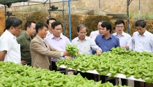 deputy pm commends agricultural cooperatives in lam dong