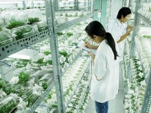 binh phuoc eyes hi tech agricultural cooperation with japan