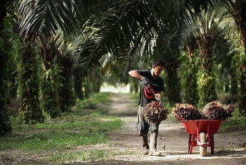 indonesian embassy promotes palm oil paper trade with vietnam