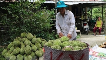 efforts made to boost vietnamese fruit exports to china