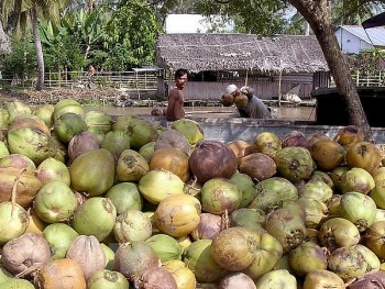 ben tre exports up 153 percent in years first half