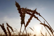 russia becomes vietnams top wheat supplier