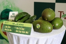 activities to promote dak nongs specialty avocados