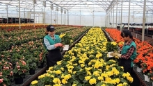 japanese experts help da lat farmers develop high quality flower production