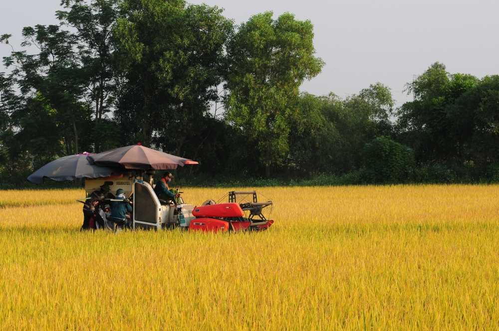 agricultural sector maintains growth in first half