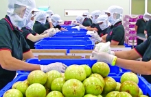 new opportunities open up for agricultural product processing