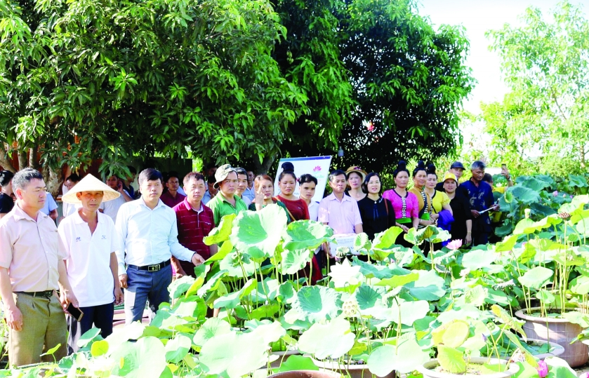 nghe an grows dozens of lotus varieties to attract visitors