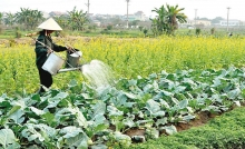 agricultural sector strives to attain growth target