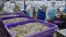 vietnamese shrimps continue to encounter us anti dumping duty
