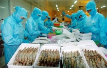 chinese market promising for vietnams shrimps as exports surge 30 pct