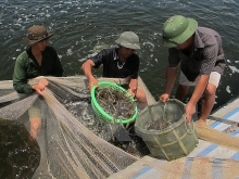 phu yen applies high technology in shrimp farming