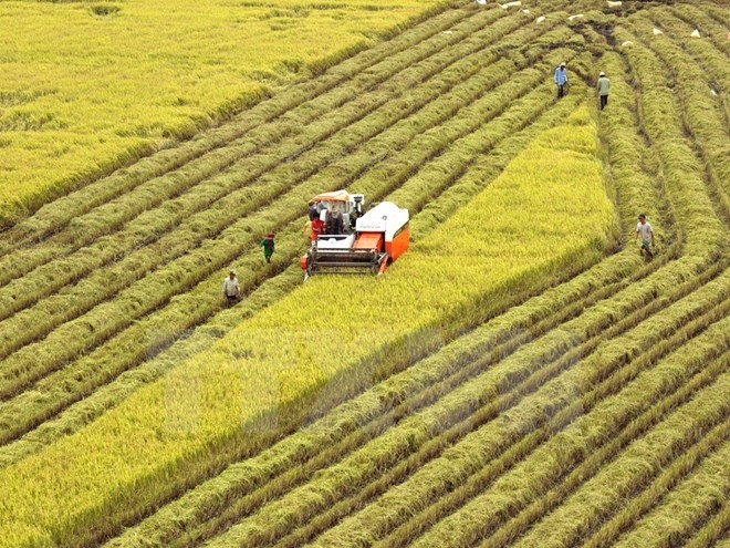 huge potential for vietnams rice exports to singapore