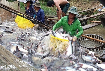 new program to tighten control of catfish exported to us