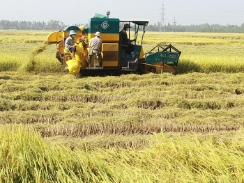 project launched in thai binh to promote sustainable rice production