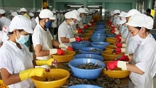 asia an emerging market of vietnams shrimp industry