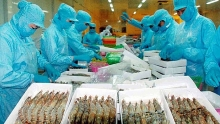 vietnamese shrimp exports to the us may benefit from us china trade conflict