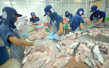 tra fish exports surge in seven months