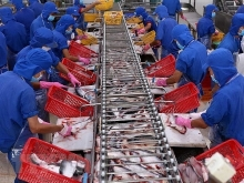 tra fish exports to us enjoy strong surge