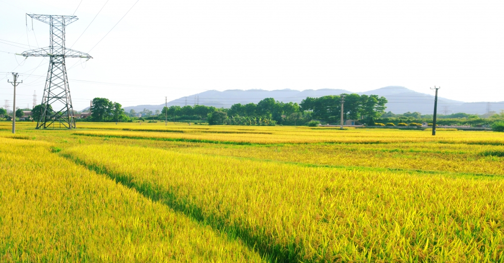 agriculture targets 26 3 percent growth in 2020