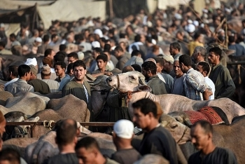 in inflation hit egypt eid sacrifices are a luxury