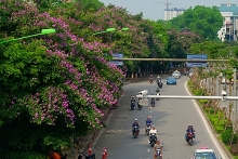 hanoi to remove another 130 trees to make way for metro line