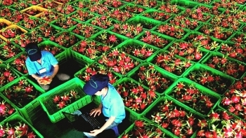 agro forestry fishery exports reach nearly us 27 billion in nine months