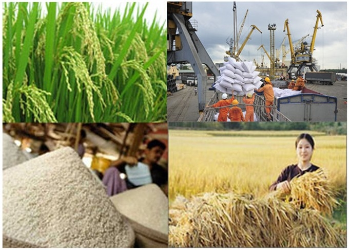 egypt agrees to import 1 million tonnes of rice from viet nam
