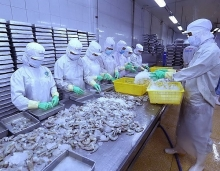 us lowers anti dumping tariff on vietnams shrimp exports