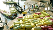 new decree removes tough conditions for rice exports